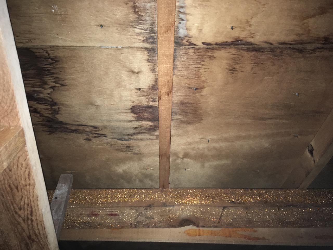雨漏り,屋根